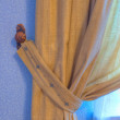 Стоковое фото: Brown curtain in wings with blue wall