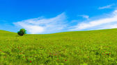 Panorama of green fields — Stock Photo