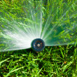 Stock Photo: Sprinkler of automatic watering