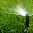 Sprinkler of automatic watering — Stock Photo #3912297