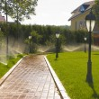 Foto Stock: Sprinkler of automatic watering in garden