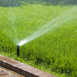 Sprinkler of automatic watering — Stock Photo #3912322