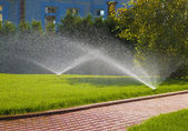 Sprinkler of automatic watering in garden — Photo