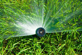 Sprinkler of automatic watering — Stock Photo