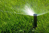 Sprinkler of automatic watering — Photo