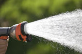 Hand watering — Stock Photo