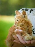Small fluffy kitten — Stock Photo