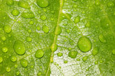 Leaf with rain drops — Stock Photo