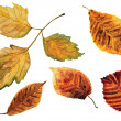 Beautiful water color autumn leaves - Stock Photo