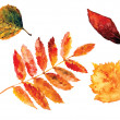 Beautiful water color autumn leaves — Photo