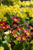 Spring flowers — Photo