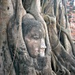 Buddha head — Foto Stock #2757501