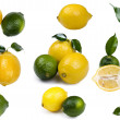 Постер, плакат: Fresh lime with lemon
