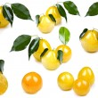 Yellow plum on white background close up — Foto Stock