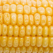 Corn macro — Stock Photo