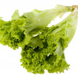 Lettuce on white — Foto Stock