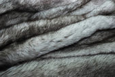 Furs of polar fox — Stock Photo