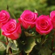 Five scarlet beauty roses — Stock Photo #3498027