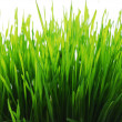 wheatgrass — Stock Photo #3499389