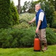 Senior man florist working in the garden - Stock Photo