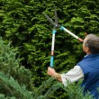 Senior man gardener cut a hedge - Stock Photo