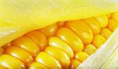 Gele maïs — Stockfoto