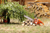 Cleanup in the garden — Stock Photo