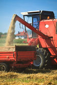 Tractor and combine harvesting wheat — Stock Photo