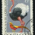Postmark — Stock Photo #3185511