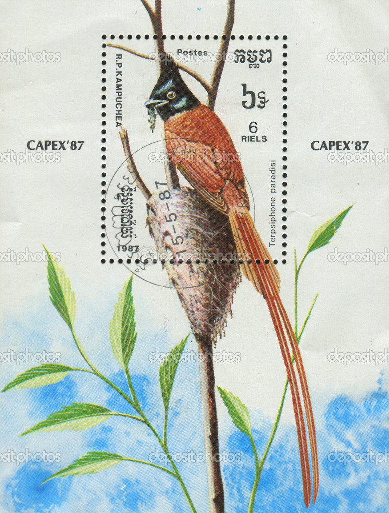 CAMBODIA - CIRCA 1987: stamp printed by Cambodia, shows bird Terpsiphone paradisi, circa 1987. — Stock Photo #3188804