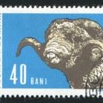 Postmark — Stock Photo #4150420