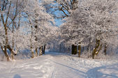 Cold winter day — Stockfoto