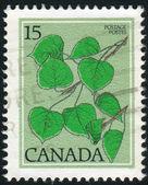 Briefmarke von kanada — Stockfoto