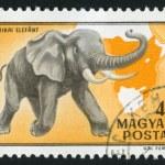 Постер, плакат: Stamp by Hungary