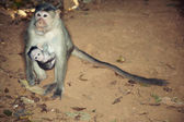 Monkey with child — Stock Photo