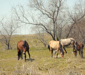 Browsing horses — Stock Photo