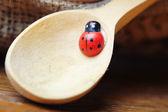 Lieveheersbeestje op lepel — Stockfoto
