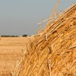 Rolling haystack and wheat — Stock Photo