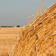 Royalty-Free Stock Photo: Rolling haystack and wheat