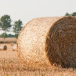 Royalty-Free Stock Photo: Rolling haystack on farmer field