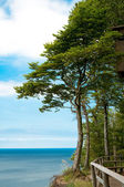 Trees at high hill on seashore — Stock Photo