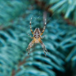 Stock Photo: Spider on web hanging on the branch
