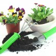 Stock Photo: Gardening with spring flowers