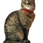 Cat portrait — Stock Photo #3248299