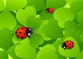 Ladybird on leaf — Stock Vector