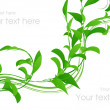 Stockvector : Green leaf curve