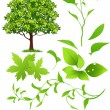 Royalty-Free Stock Vector Image: Leaf collection