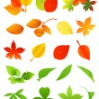 Stock Vector: Leaf icon set