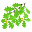Vector de stock : Oak leaf
