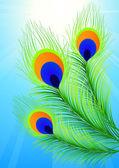 павлинье перо — Cтоковый вектор